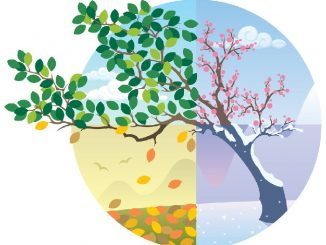 Cycle of the Seasons