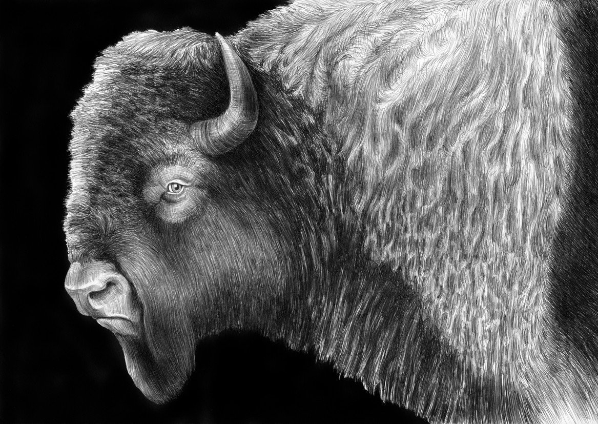 Gerald Parsons of Stratford, Oklahoma, left bottom, checks out one of his herd of 80 buffalo.