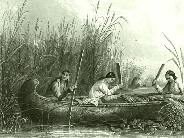 Wild_rice_harvesting_19th_century